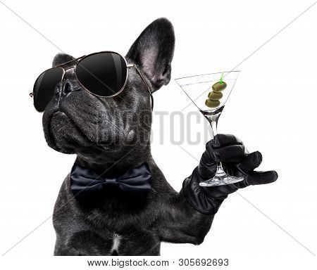 Cool Drunk French Bulldog  Dog Cheering A Toast With Martini Cocktail Drink , Looking Up To Owner ,