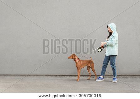 Girl And Dog On A Leash Are Walking Against The Background Of A Gray Wall. Owner Walks The Dog On A