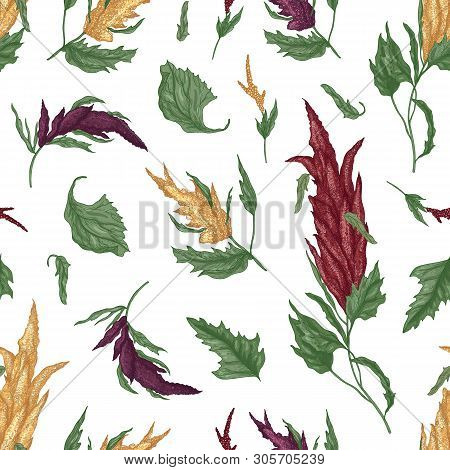 Natural Seamless Pattern With Quinoa Or Amaranth Flowering Plant On White Background. Backdrop With