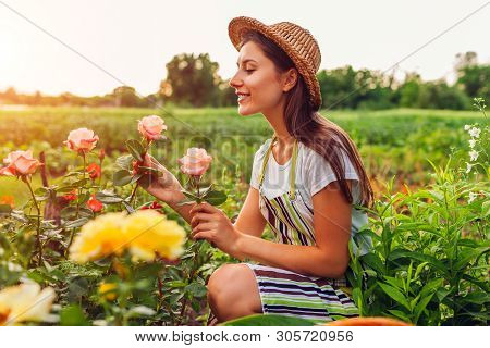 Young Woman Gathering Flowers In Garden. Middle-aged Woman Smelling And Admiring Roses. Gardening Co