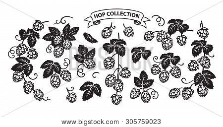 Branches Of Hops. Set Of Elements For Brewery Design. Hop Cones With Leaves Icons. Vector Illustrati