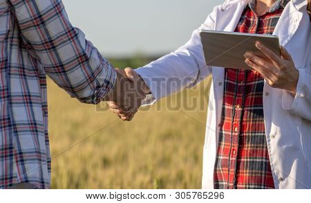 Close Up Of Handshake Of Farmer And Agronomist In White Coat In Barley Field In Summer, Before Harve