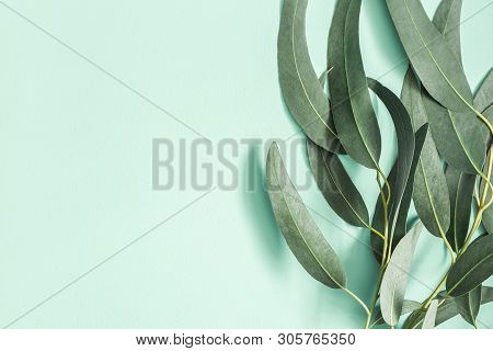 Eucalyptus Leaves On Mint Background. Pattern Made Of Eucalyptus Branches. Flat Lay, Top View, Copy