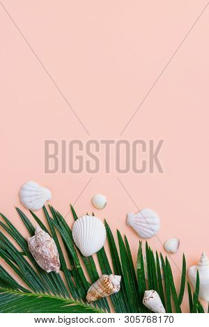Beautiful Feathery Green Palm Leaf White Sea Shells On Pastel Pink Wall Background. Summer Tropical