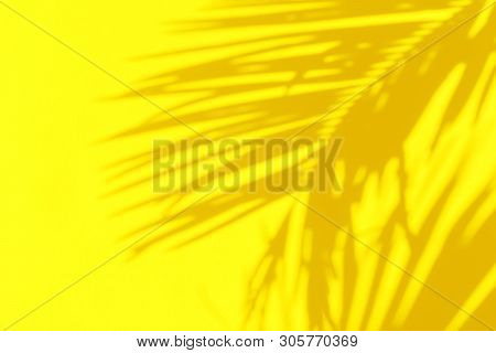 Shadow Silhouette Of Beautiful Feathery Palm Leaf In Sunlight On Bright Sunny Yellow Color Wall Back