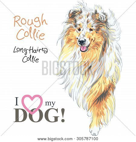 Vector Sketch Of Sweet Dog Sable And White Rough Collie Breed Hand Drawing Vector