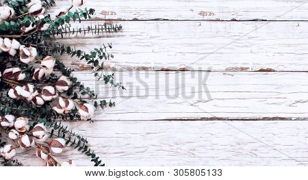 Cotton Flowers And Eucalyptus Branches Over A  White Wooden Texture Backdrop. Image Shot From Overhe