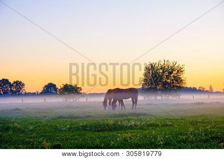 Two Horses Grazing In Foggy Grass Field In The Morning Against A Backdrop Of Tree Silhouettes And A