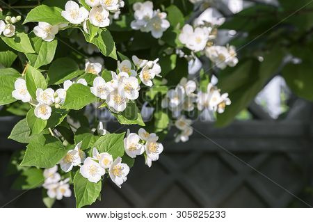 Natural Floral Tropical Exotic Botanical Background With Flowers. Gardening. A Branch Of Delicate Fl