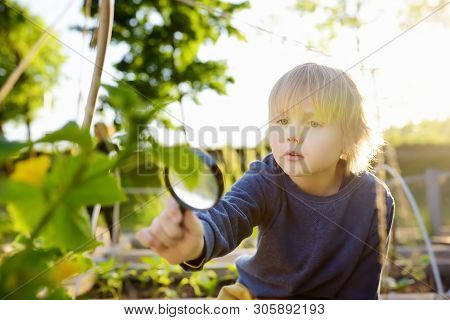 Little Child Exploring Nature With Magnifying Glass In Community Kitchen Garden . Close Up. Little B