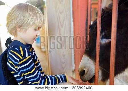 Little Boy Feeding Donkey. Child In Petting Zoo. Kid Having Fun In Farm With Animals. Children And A