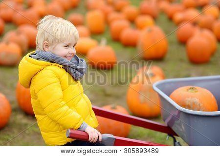 Little Boy On A Tour Of A Pumpkin Farm At Autumn. Child Sitting On Giant Pumpkin. Pumpkin Is Traditi