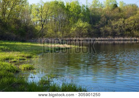 Along Banks Of Pond At Edge Of Forest During Spring Season In Salem Hills Park Inver Grove Heights M