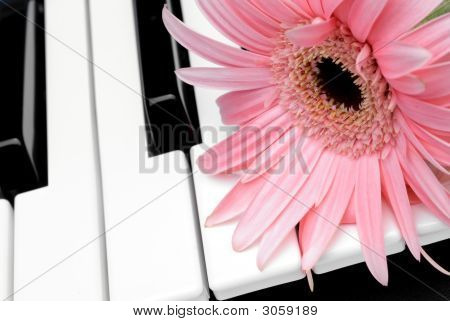 Pink Flower On A Piano Keyboard