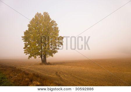 Tree in a fog