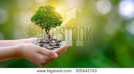 Hand Coin Tree The Tree Grows On The Pile. Saving Money For The Future. Investment Ideas And Busines