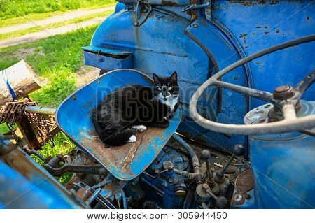 Domestic Cat Lying In A Blue Tractor