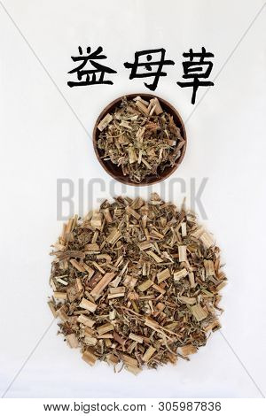 Motherwort herb used in Chinese herbal medicine with calligraphy script, promotes blood circulation,  promotes urination, relieves swelling & edema. Translation reads as Chinese motherwort. Yi mu cao. poster