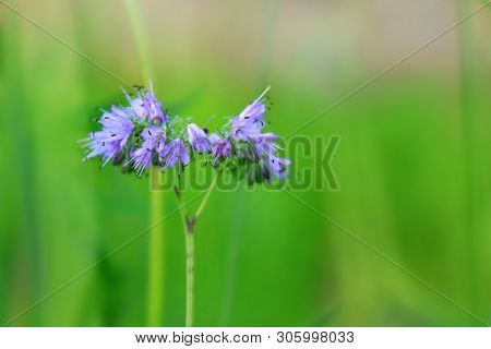 Close up shot of blue bell flowers