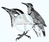 set birds ornithology. Beautiful bird close-up - detailed realistic vector bird on gradient background poster