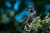 A European Starling Perched in a Tree poster