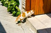 Red and white cat on the threshold of the house in the resort town. Homecoming. poster