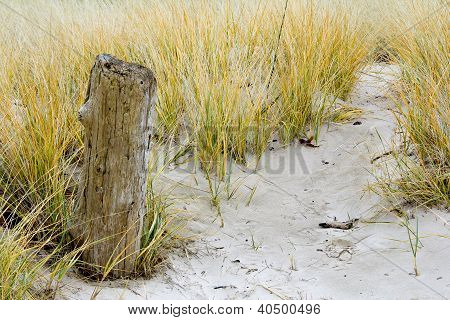 Driftwood And Dune Grass