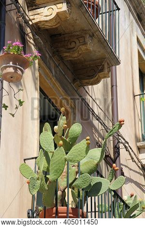 Balcony In An Old Tenement House, Cactus On The Balcony, Architecture In A Small Italian Town