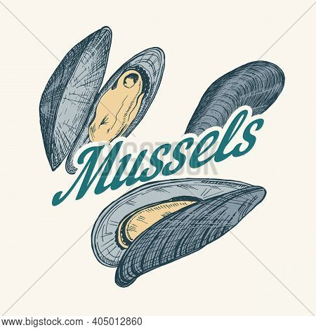 Mussels Badge Or Logo In Vintage Retro Style. Nautical Molluscs Label. Ocean Food. Vector Illustrati