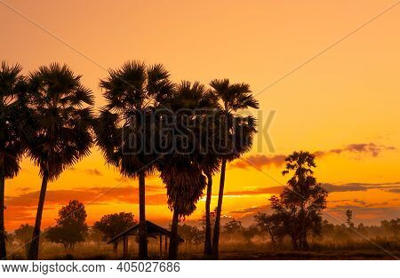 Yellow And Orange Sunrise Sky Behind Palm Tree And Tropical Forest. Golden Sunrise Sky And Silhouett