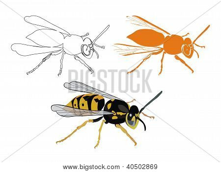 vector drawing of the wasp