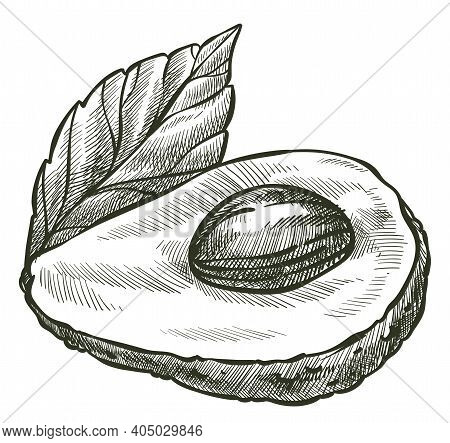 Avocado Vegetable With Seed And Leaf, Tasty Veggie