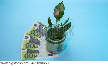 Euro banknotes. Growing plants in savings coins, money in a bank with a tree, investment and interest concept, bank,piggy bank,Money,Coins,Concept,Tree, Sprout growing on glass piggy bank
