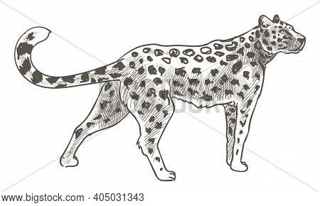 Leopard Animal With Spots On Fur, Cheetah In Zoo