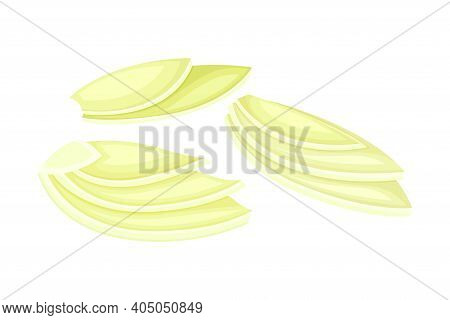 Fresh Fennel Fruit As Aromatic Anise-flavored Vector Illustration