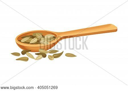 Dried Fennel Fruit As Aromatic Anise-flavored In Wooden Spoon Vector Illustration
