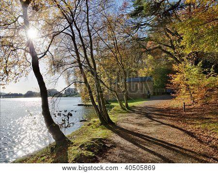 Trees at Talkin Tarn on an Autumn day.