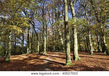 Autumn trees in Talkin Tarn Country Park