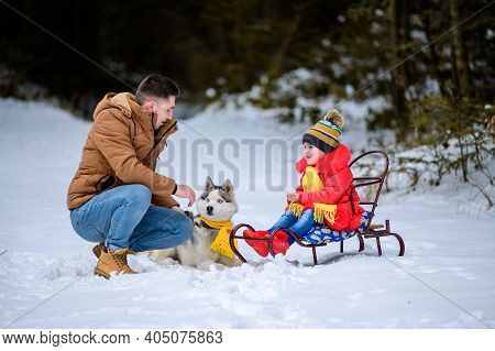 Husky In The Woods With The Owner And His Daughter, A Sleigh Ride Through The Woods, Fun Husky Games