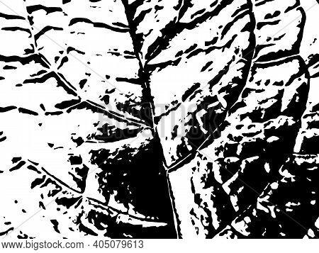 Black And White Leaf Vein Vector Texture. Black Splatter On White Background. Natural Leaf Stamp For