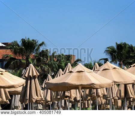 South Beach Vacation. Many Large Fabric Sun Umbrellas. Tall Palms Behind Umbrellas. Blue Cloudless S
