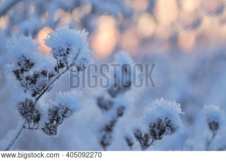 Frosty Plants On A Sunny Winter Morning