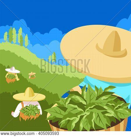 Tea Pickers. Vector Illustration Of People On A Tea Plantation. Vector