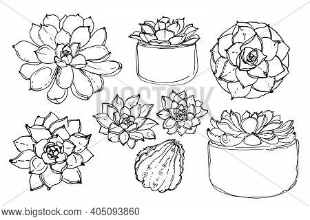 Cacti And Succulents, Indoor Flowers In Pots. Home Decor.