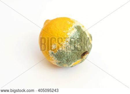 Blue Mold On Yellow Lemon. Spoiled Rotting Fruit With Mold On A White Background. Blue-green Mold On
