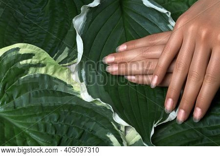 Beautiful Female Palms With Perfect Naturel Manicure. Natural Cosmetic For Hand Care. Light Nails Po