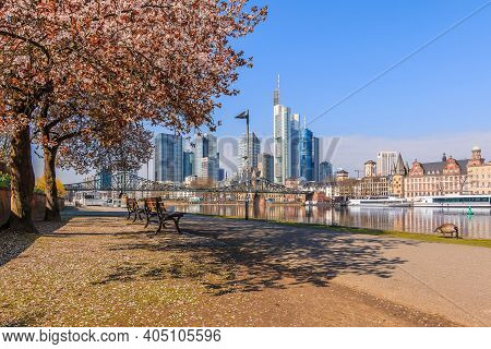 Skyline With Skyscrapers Of Frankfurt With The River Main. Main Bank With Path. Tree With Blossom An
