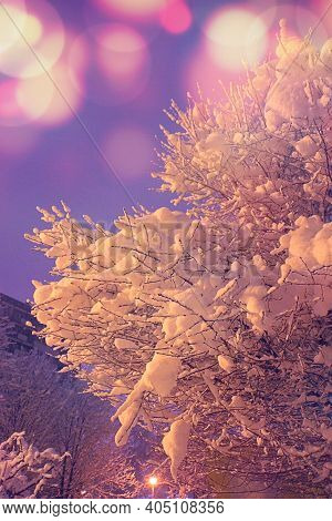 Winter Season, Tree Covered With Snow, A Lot Of Snow On The Streets And Sidewalks, Evening In Winter