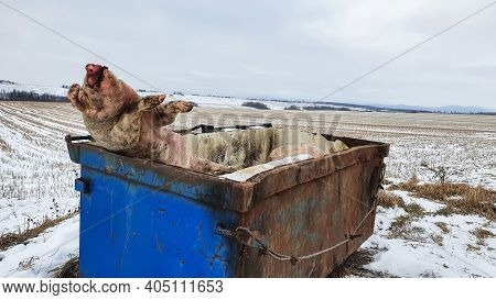 Close Up Shot Of A Big Blue Metallic Dumpster In The Middle Of Nowhere, In Which Somebody Illegally