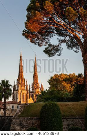 Bayonne Cathedral and a pine tree at sunset in France